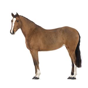Sandezia Sucha Dezynfekcja - koń zdjęcie miniaturka
