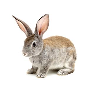 Sandezia Sucha Dezynfekcja - królik zdjęcie miniaturka